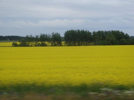 Die Felder an Prince Edward Eiland sin schee....gell?