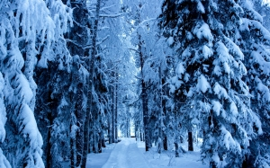 winter-snowy-forest-wallpaper